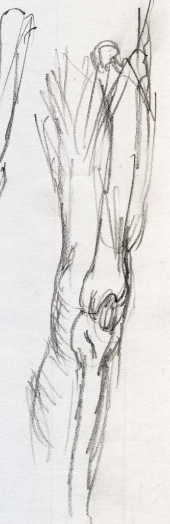 ダヴィンチのひざの素描の模写