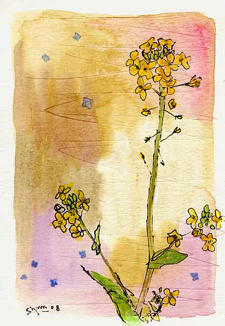 菜の花のスケッチ画作品画像