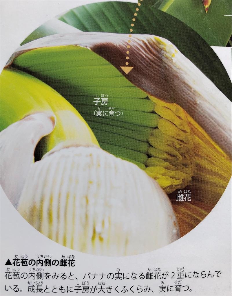 f:id:shunsukeohashi23:20210515100334j:image