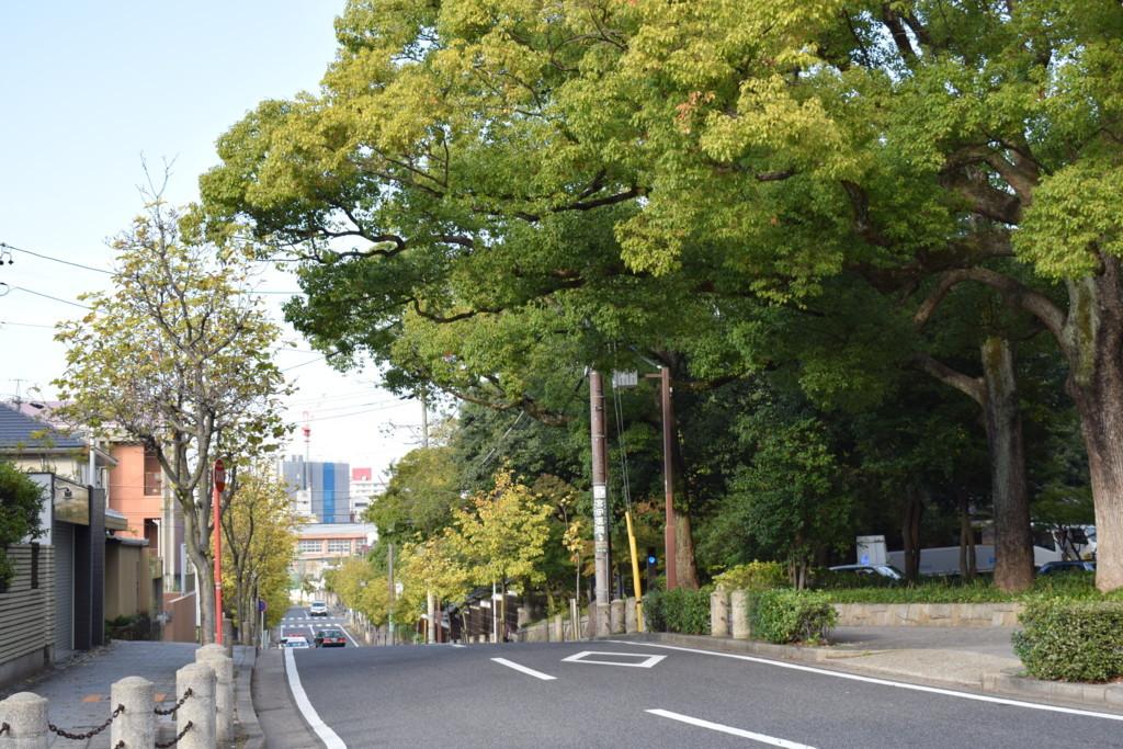 f:id:shuntaro9524:20171103150721j:plain