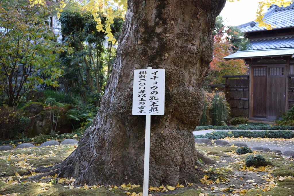 f:id:shuntaro9524:20171125152759j:plain