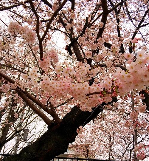 f:id:shusaku1:20170405132836j:image