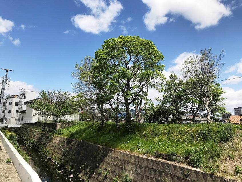 f:id:shusaku1:20190427123312j:plain