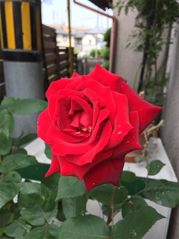 f:id:shushuA:20170515003553j:image