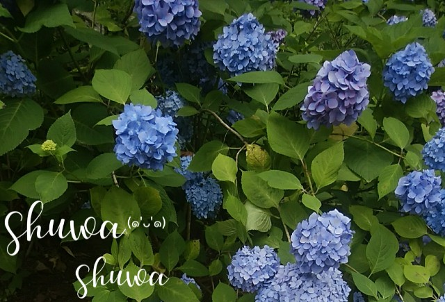 f:id:shuwachan:20190707145258j:image