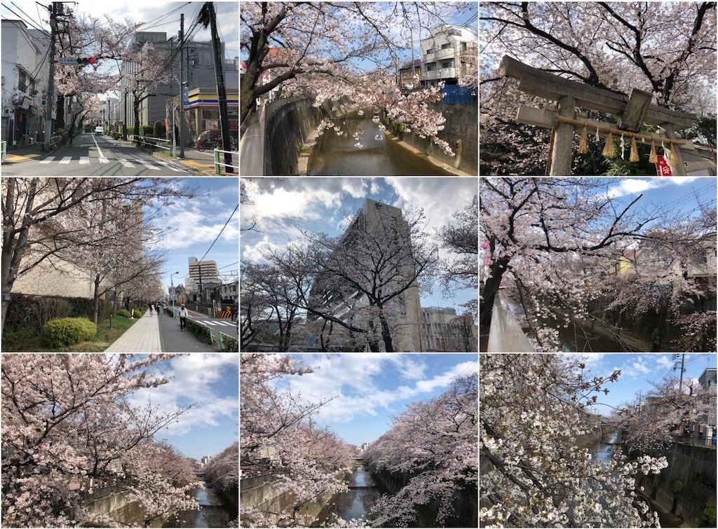 f:id:shyamamo:20190401181837j:image