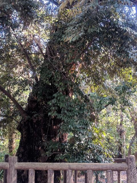 f:id:shyanthiprivatesalon:20181004133451j:image