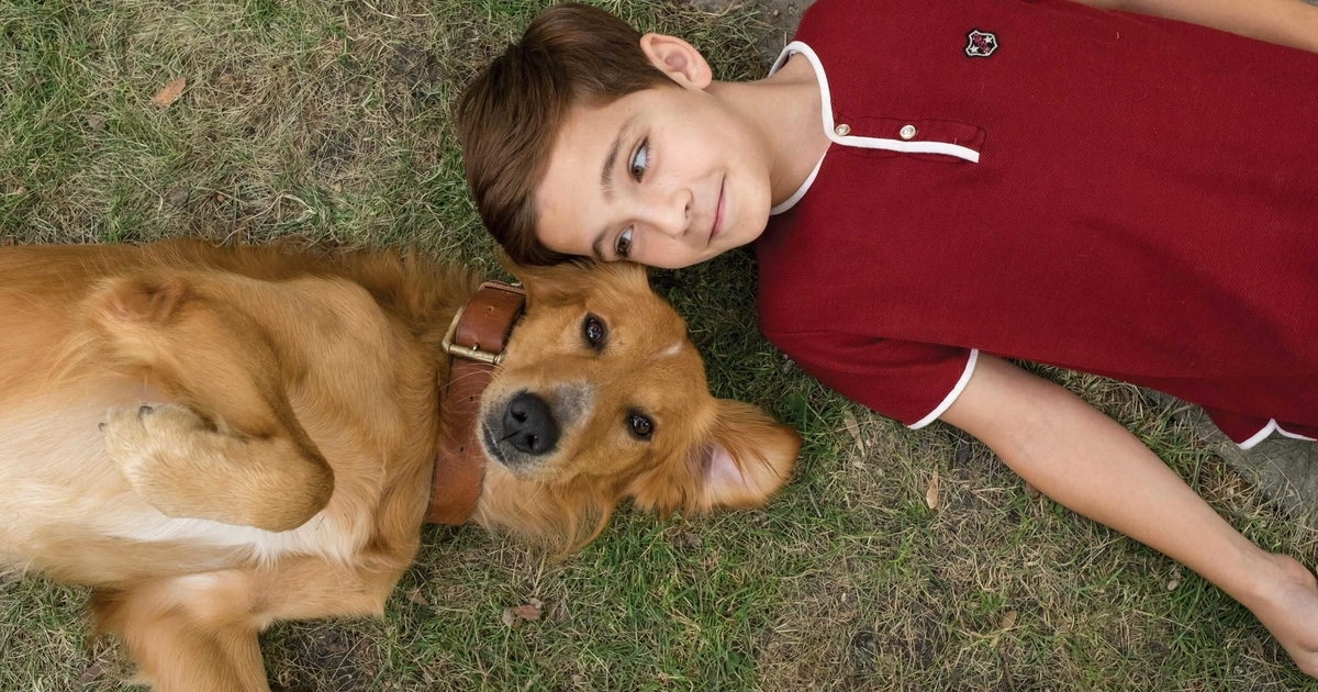 scene from movie called A Dog's purpose