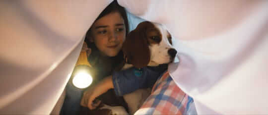 beagle of dog from movie named A Dog's journey