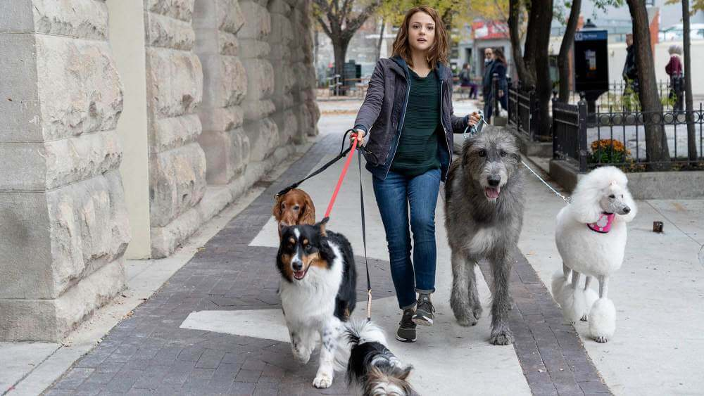 one young girl with brond hair walking with her dogs from the scene of movie called A dog's journey