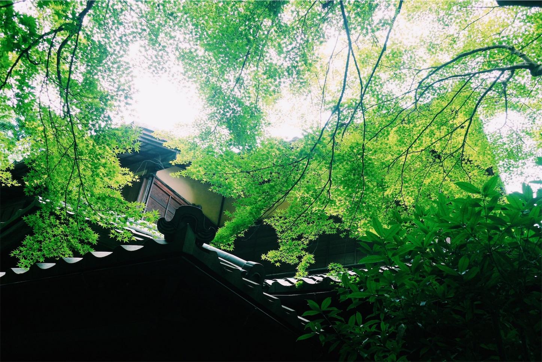 f:id:si_ku:20170616004008j:image