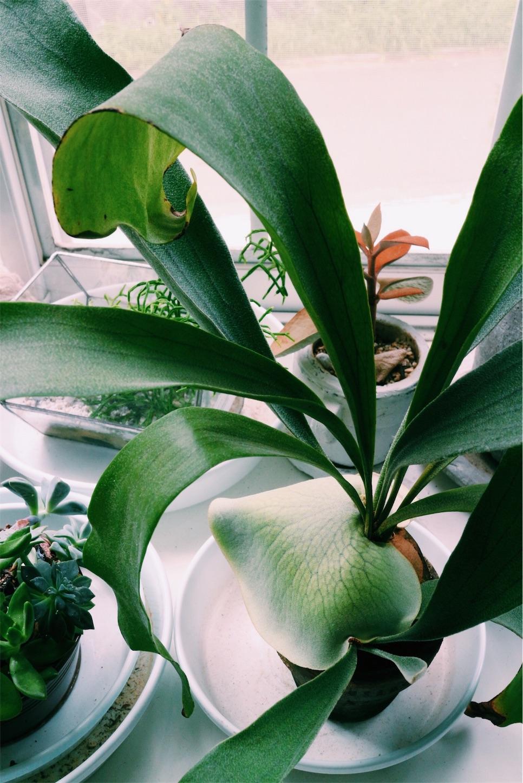 ちょっと変わった植物画像