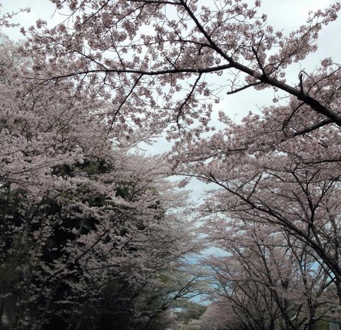 f:id:siawasejiro:20170404145015j:plain