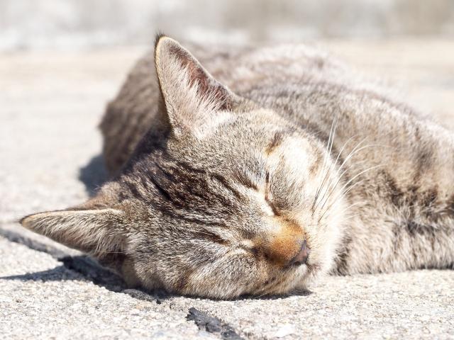 ねむねむ猫