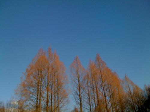 f:id:siestajun:20110104151715j:image