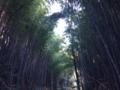 【伊東市】みかんの花咲く丘コース / ハイキング