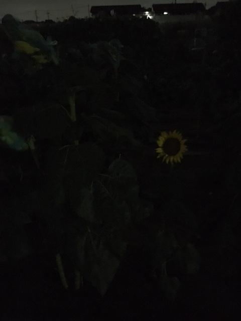 f:id:siitaka0922:20180807211635j:plain