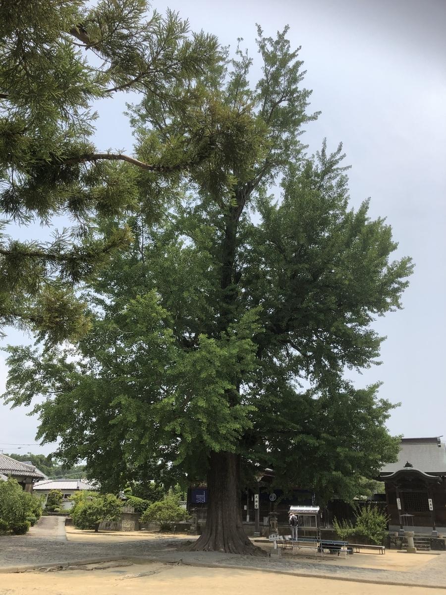 f:id:sikakebunko:20190620231838j:plain