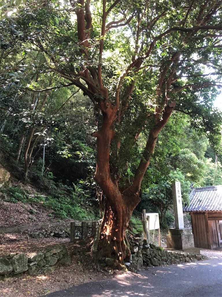 f:id:sikakebunko:20190626065229j:image
