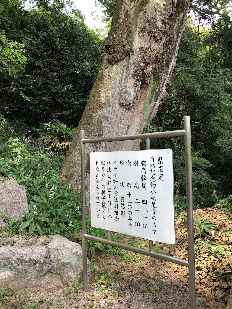 f:id:sikakebunko:20190902192510j:image
