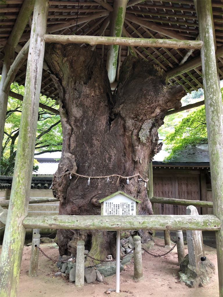 f:id:sikakebunko:20190911115509j:image