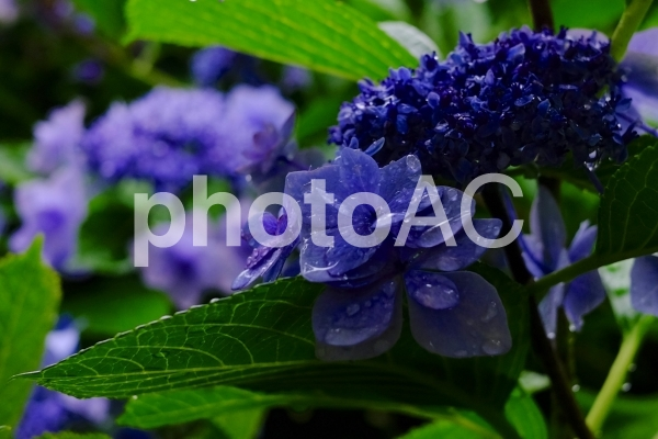 f:id:sikanosuke6:20200521214429j:plain