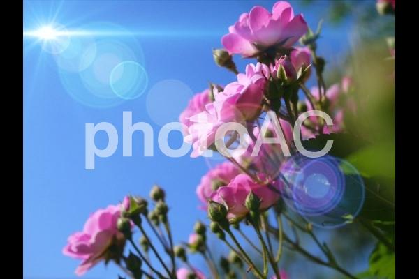 f:id:sikanosuke6:20200522100118j:plain