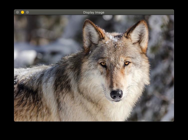 ウィンドウ画面に狼の画像が表示される