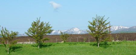 山の残雪、除雪の小山、葉桜