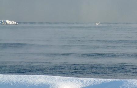 毛嵐の中の漁船