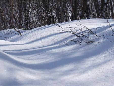 春に片栗の咲く裏山で2007年2月11日撮影