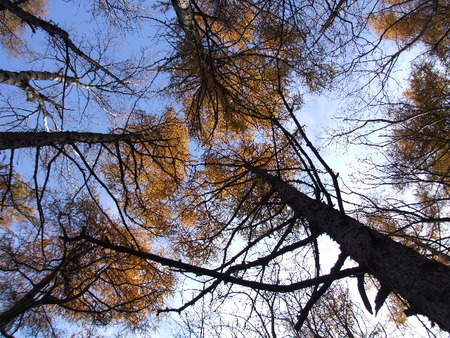 f:id:sikihuukei:20071110200621j:image