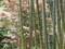 後楽園にて2008年5月8日撮影