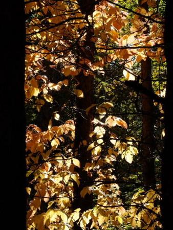 f:id:sikihuukei:20081009171327j:image