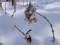 新雪に埋もれた庭のガクアジサイ