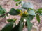 裏山にて2010年4月18日撮影