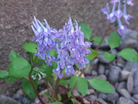 庭にて2010年5月4日撮影