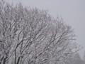 [小樽の風景]裏山にて2010年12月7日撮影