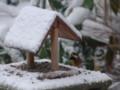 [小樽の風景]庭にて2010年12月7日撮影
