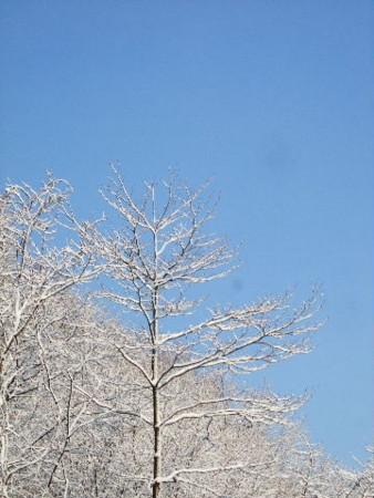 裏山にて2010年12月24日撮影