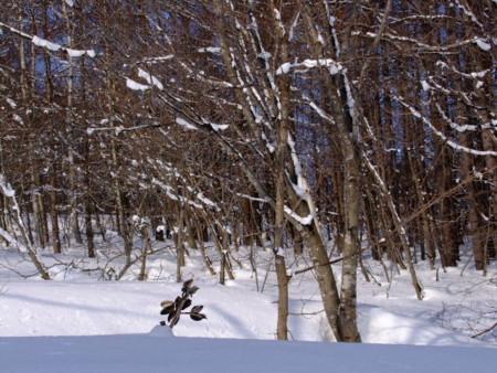 f:id:sikihuukei:20110209112411j:image