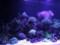 おたる水族館にて2011年7月22日撮影
