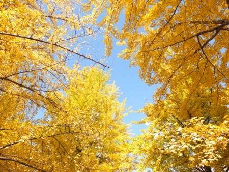 f:id:sikihuukei:20111105193231j:image