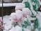 庭にて2011年11月15日撮影
