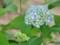 小樽手宮緑化植物園にて2012年7月6日撮影