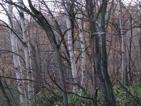 f:id:sikihuukei:20121115093737j:image