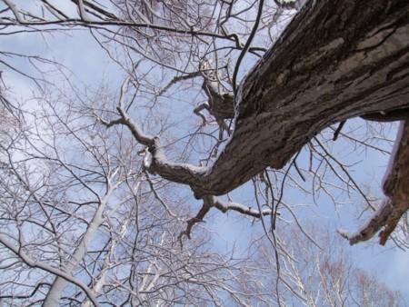 f:id:sikihuukei:20121128155418j:image