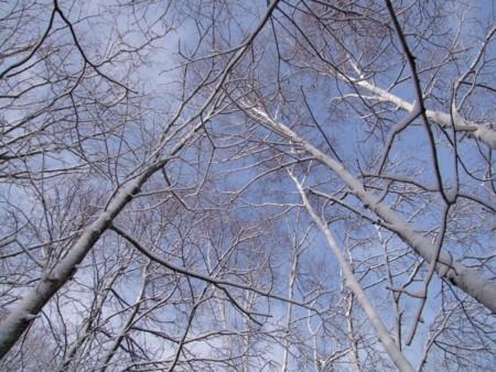 f:id:sikihuukei:20121128155420j:image
