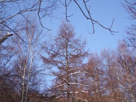 f:id:sikihuukei:20121213141959j:image