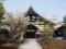 高台寺にて2013年4月16日撮影